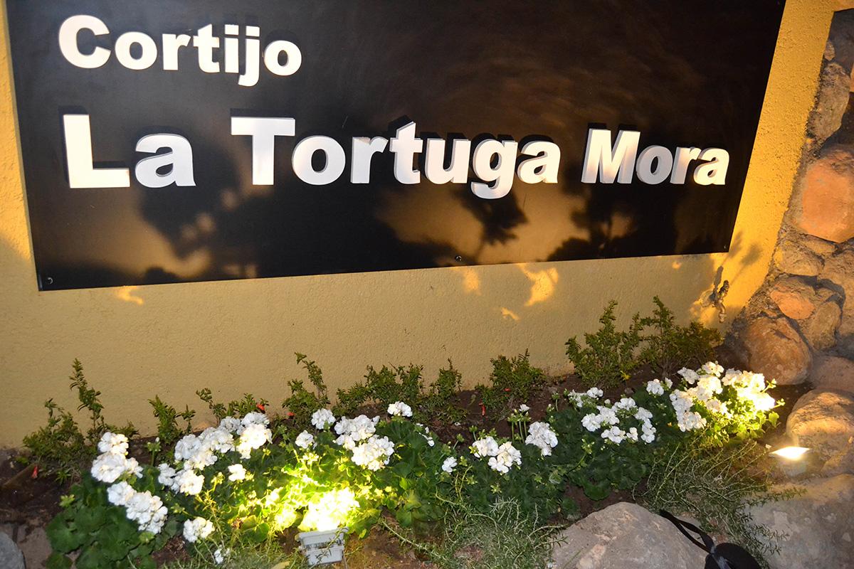 La Tortuga Mora. 2017